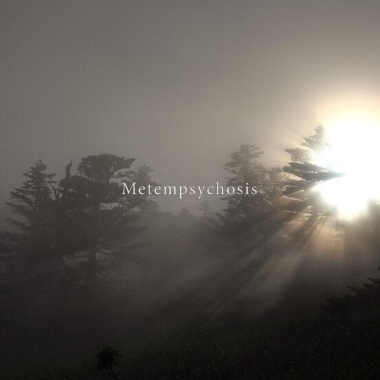 still metempsychosis